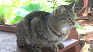 Lana'i City, HI — Lana'i Cat Sanctuary