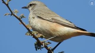 A bird standing over a tree branch
