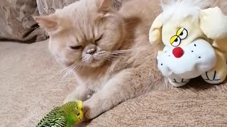Cat wants nothing to do with overly attached parrot