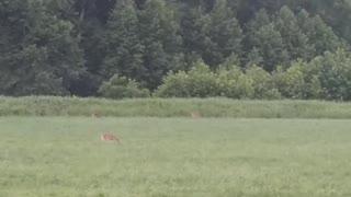 Cutest Deer Family