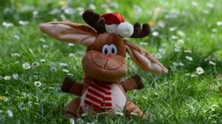 I cute reindeer dancing on tolls grass