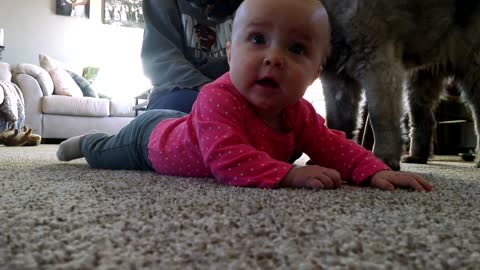 Adorable baby trying to crawl