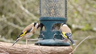 A couple from Hassoun watch feeding on the happy farm