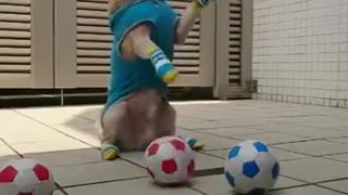 Athlete dog - sporty - funny