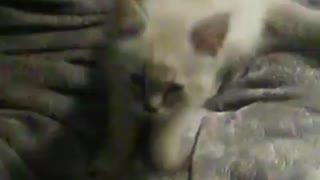 Baby making biscuits