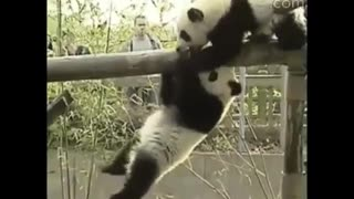 Watch Different Animals Being Jerks | Funny