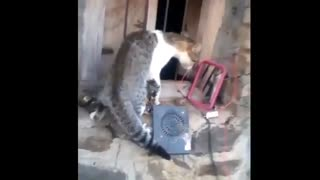 Funny animal videos compilations, very funny