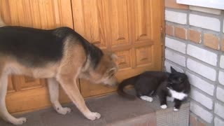 dog plays with a cat