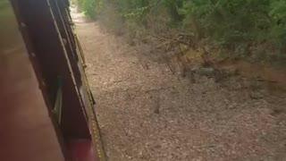 Steam Through Thick Woodlands.