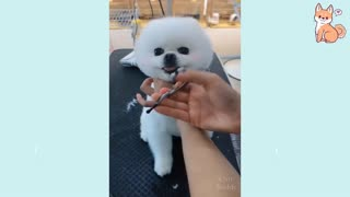 VERY Cute Puppies!!