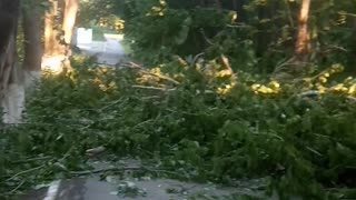 Broken trees!