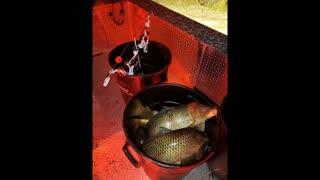 bowfishing central Wisconsin 2020