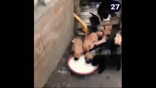 funny dog food tease