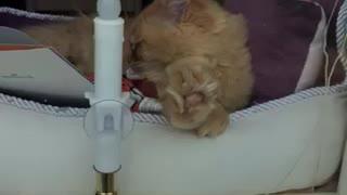 Carson H. Sleeping pushing window