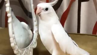 Bird Whistles If You're Happy and You Know It Song