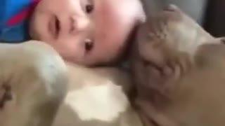 Adorable♥ Snuggle Buddies! ♥Aww Animal Moments:)♥
