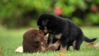 Sweet dogs 🐕