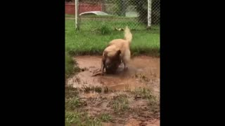 Adorable Dirty Doggy