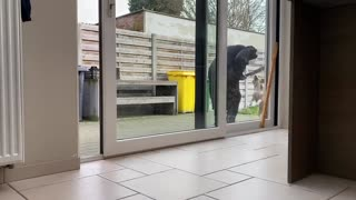 Dogs vs Ghostface Scream PRANK _ Funny Beagle Dog Reactions