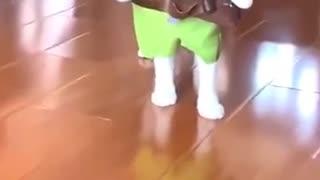 My cat is ready to fight like ninja