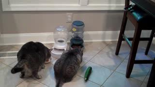 Charlie vs. Zucchini