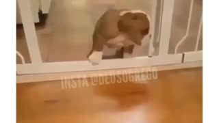 puppy puppy jumping