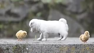 the love between animals is incredible, very cute.