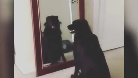 Great dog videos that you can't miss