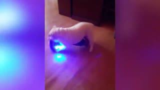 Dog Spins Around