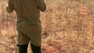 Herd of African Elephants Love Feeding Time