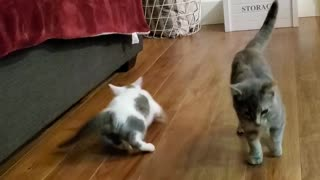 Extra Sneaky Kittens
