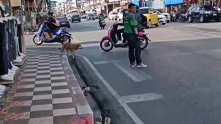 Good Samaritan Helps Dog Cross Busy Road