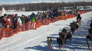 Lance Mackey Iditarod WIN
