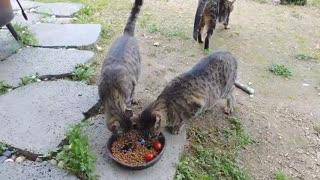 eat together 2