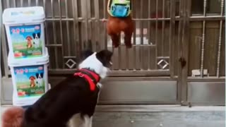 Dogs Breaking Out