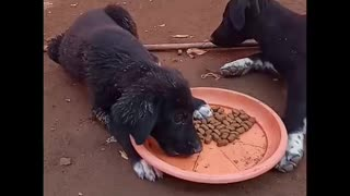 Feeding this LOVELY homeless Puppies