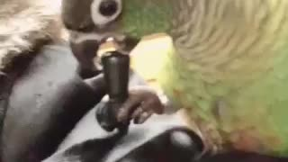 Best Toy For Parrots