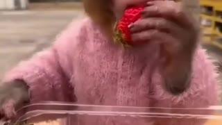 strawberry monkey