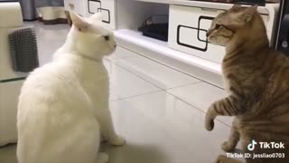 Cats Talking!! These Cats Can Really Talk!