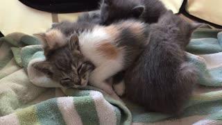 Kitten stuck at bottom of Kitten pile