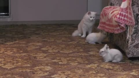 Cat and rabbit game))