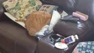 Cat gets under blankets