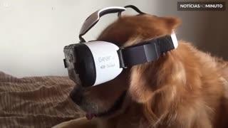 Cão experimenta óculos de realidade virtual