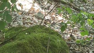 Little lizard in the forest