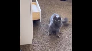 Daily cat video - 7