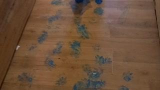 Mischievous Husky Puppies Paint the House Blue