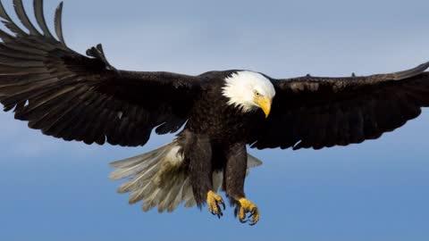 See like an Eagle 4X - Samuel J. Worship