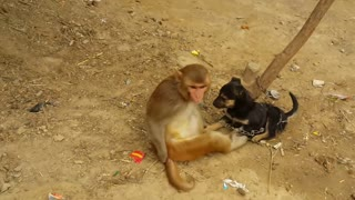 Monkey and puppy love