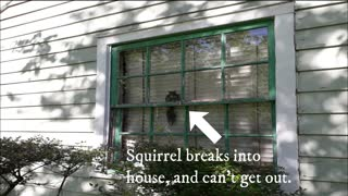 Squirrel breaks into house wants out