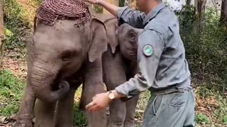 Elephant playing with the caretaker